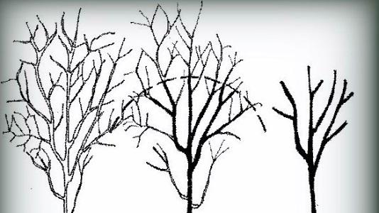 nar ağacı budama şekilleri