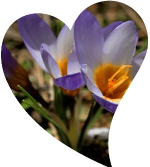 sadece türkiyede açan çiçekler