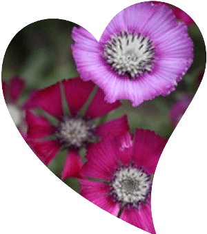 ülkemizde endemik çiçekler