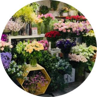 yıl boyunca çiçek açan bitkiler