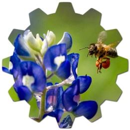 Arılar Balı Nasıl Yapıyor