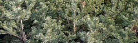 ağaçlar hakkında bilgi atahun