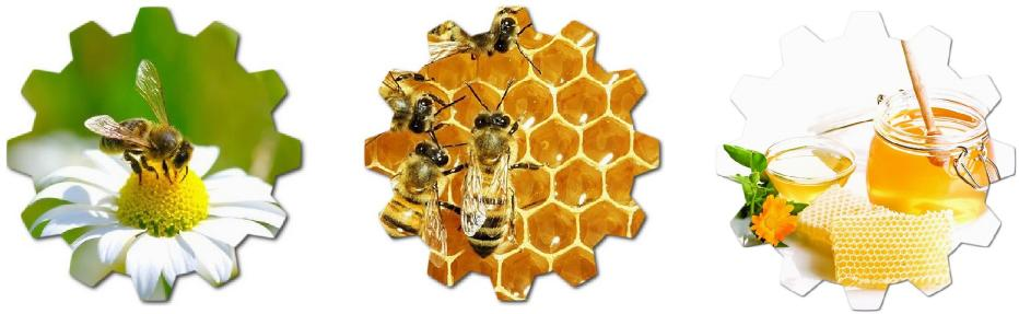 arıların bal yapma süreci