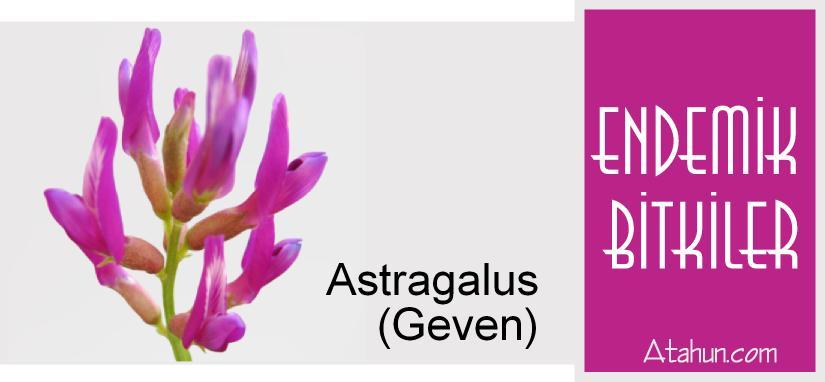 bitkiler hakkında bilgi atahun