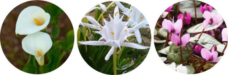 çiçekler hakkında bilgiler atahun