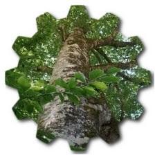 gürgen ağacından ne yapılır