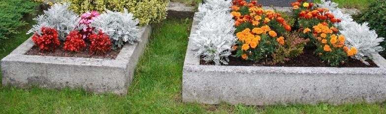 Soğuğa dayanıklı mezarlığa uygun çiçekler
