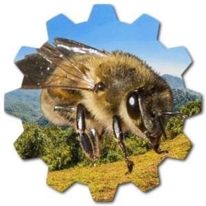esmer arı türü