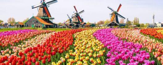 hollandada yetişen çiçeklerin isimleri