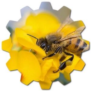 italyan arıları