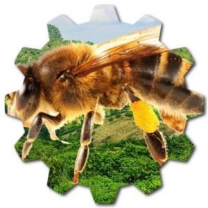 kafkas arı türü