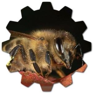 karniyol arı cinci