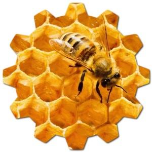 kıbrıs arısı