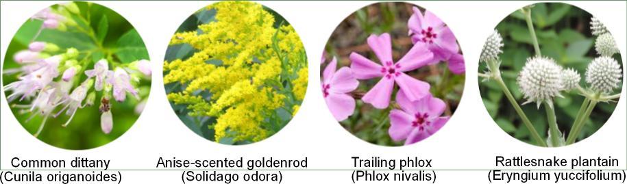 America's 10 Native Wildflowers