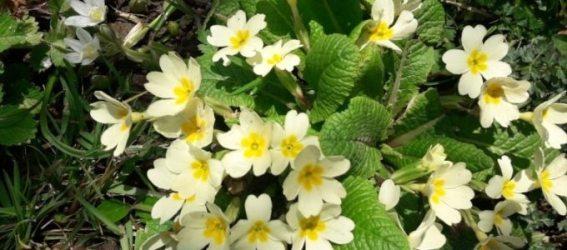 en güzel papatya çiçeği resimleri