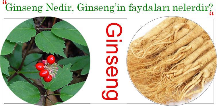 Ginseng Nedir, Ginseng hangi besinlerde bulunur?