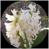 Bitki Rehberi