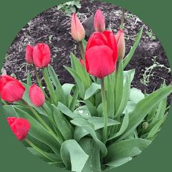 Kanada'da yetişen bitki çeşitleri
