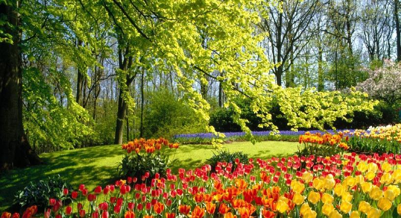 Bitkiler Hakkında Bilgiler