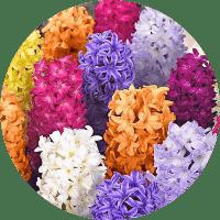 çok yıllık çiçeklerin isimleri listesi