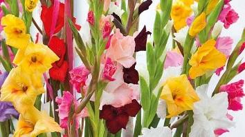 her mevsim çiçek açan bahçe çiçekleri isim listesi
