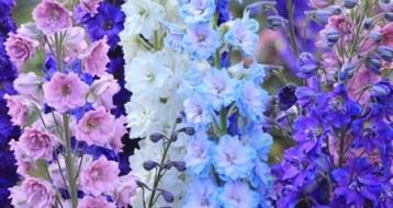 her mevsim çiçek açan bahçe çiçekleri