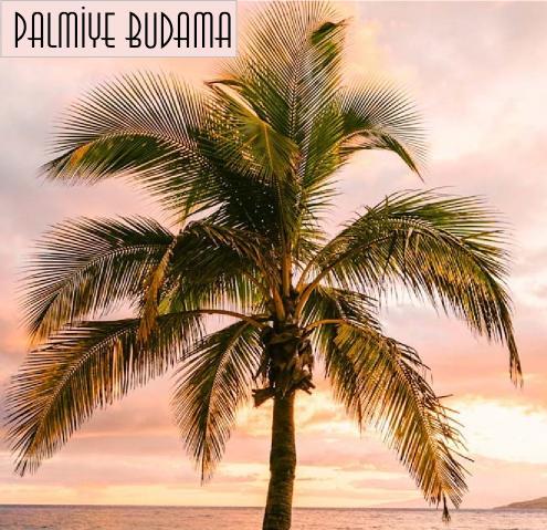 Palmiye ağacı ne zaman budanır?