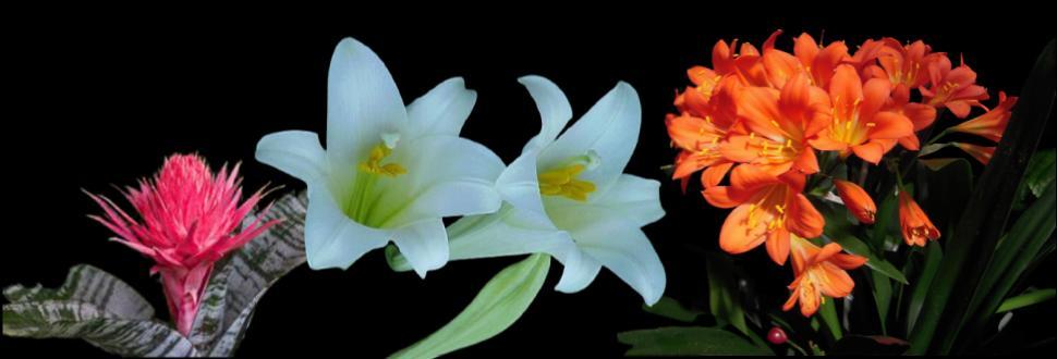 En Güzel Çiçekler Açan Bitki Çeşitleri