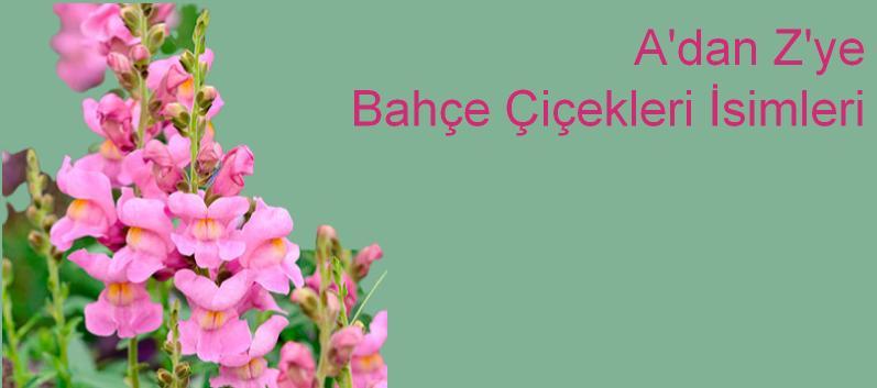 A'dan Z'ye çiçek isimleri resimli