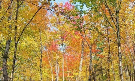 adan zye bütün ağaçların isimleri nelerdir